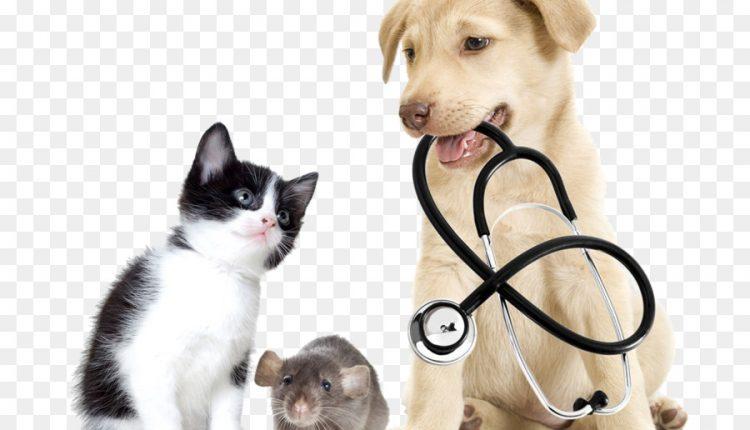 Get Pet Insurance