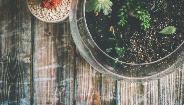 buy terrariums plants